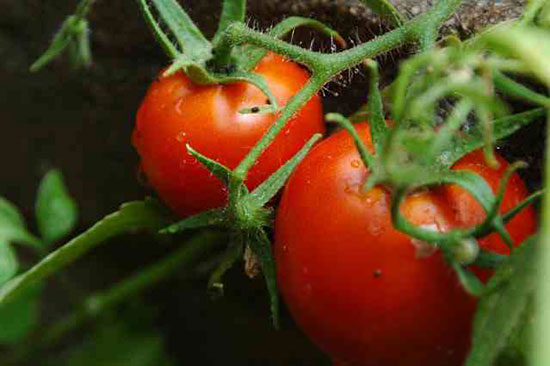 How to start growing your own vegetables