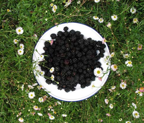 Wild blackberry foraging tips from the expert