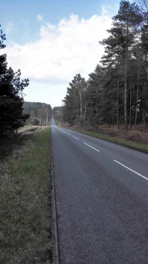 At the beginning of Cannock Chase forest