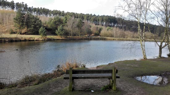 Beautiful Cannock Chase