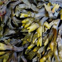 Ruth Kassinger – Seaweed Expert On Why It Is So Good For Us