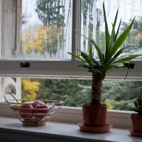 Tips For Ensuring Healthy Air in Your Home